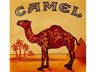 Camel. Символ революционного успеха.